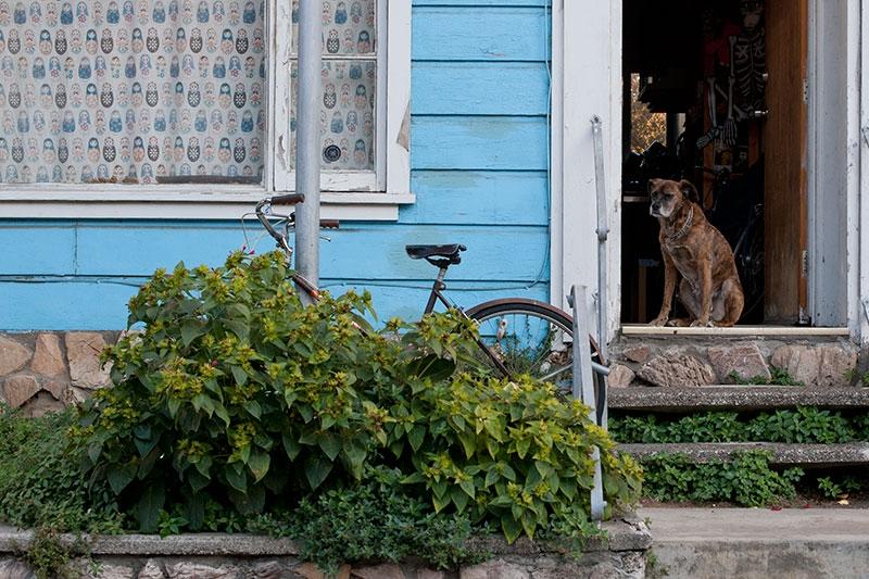 dog-in-the-door