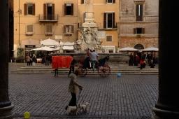 pantheon-dogs