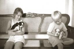 cuba-puppies