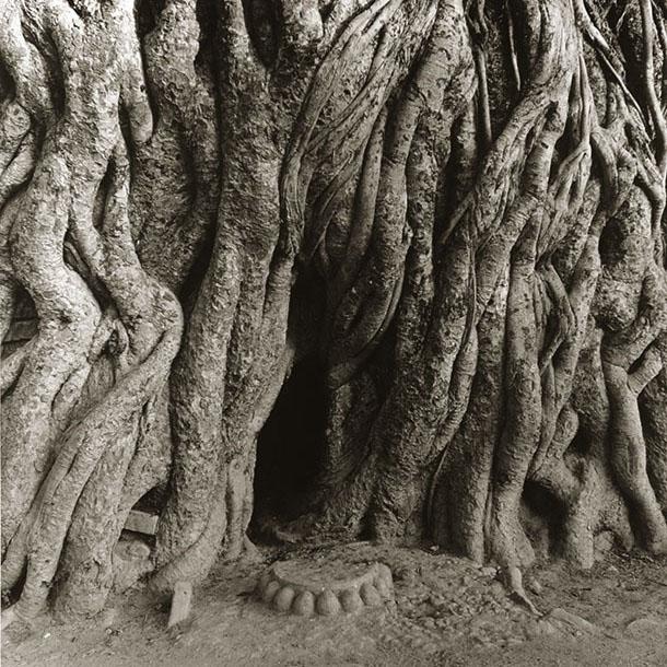 banyan-shrine-nepal
