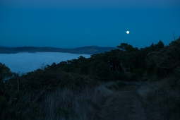 moon-trail